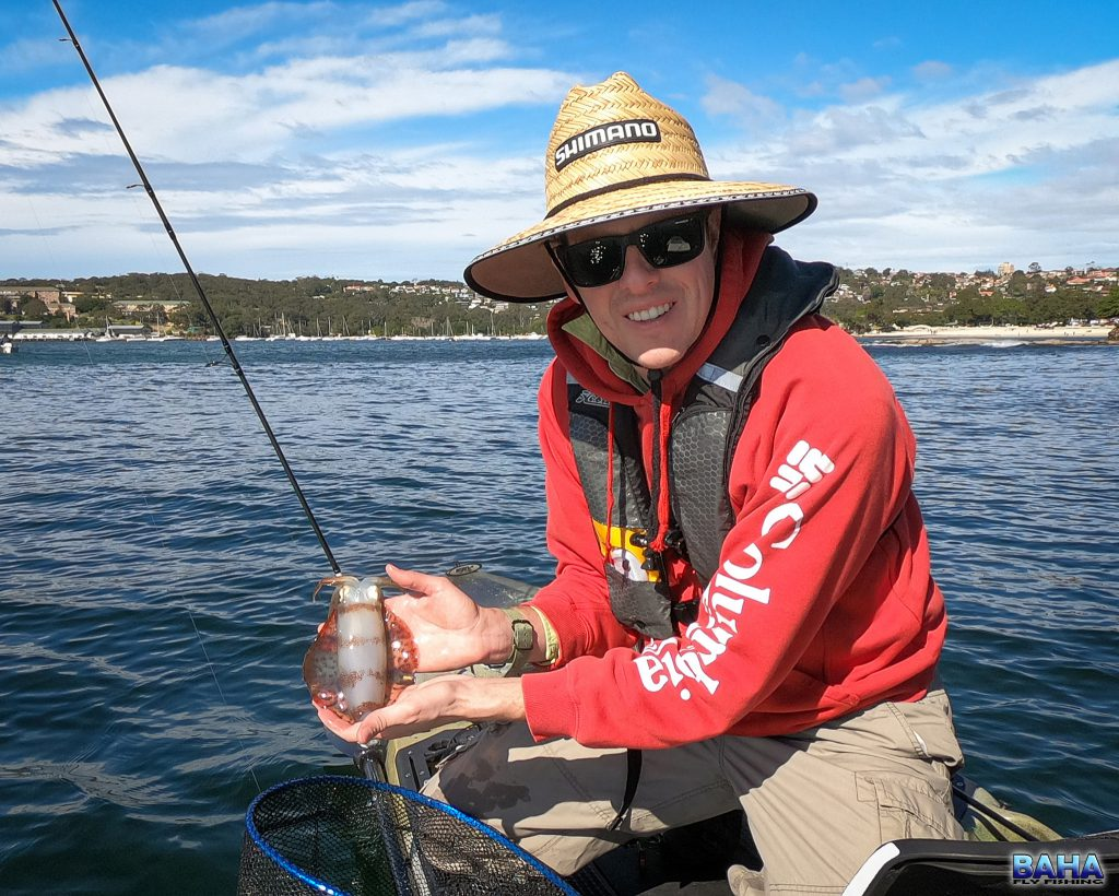 A squid caught in the Sydney Harbour