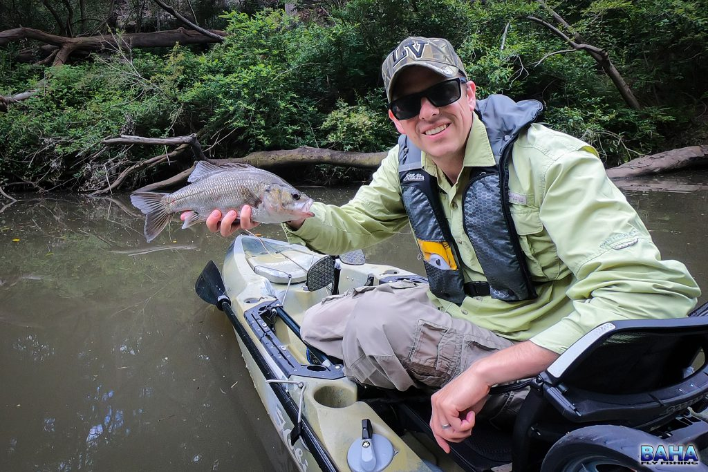 An Aussie bass caught on popper in the Lane Cover River
