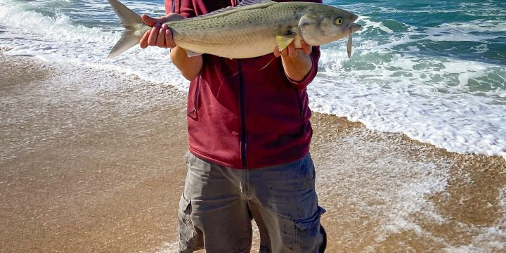 Lake Macquarie and Blacksmiths Beach on Fly (and Lure)