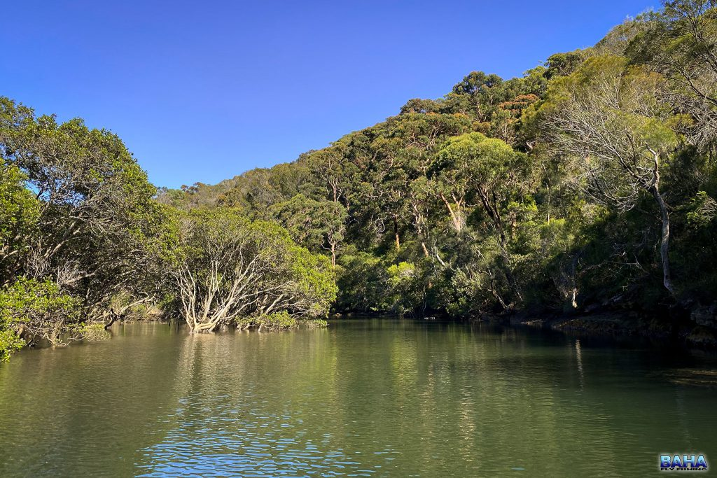 Gorgeous bays with mangroves