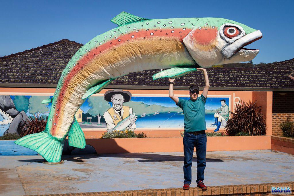 Oberon is definitely a trout region